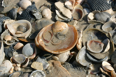 Shells Within Shells